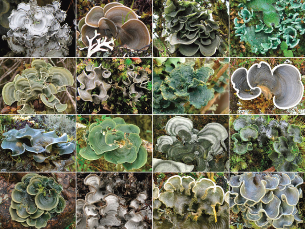 Lichens, Species, Grids, Fieldwork, and the NSF | likenology